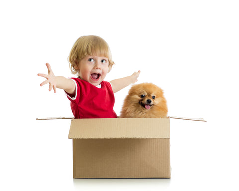 Child and pomeranian playing in a welcome bundle box