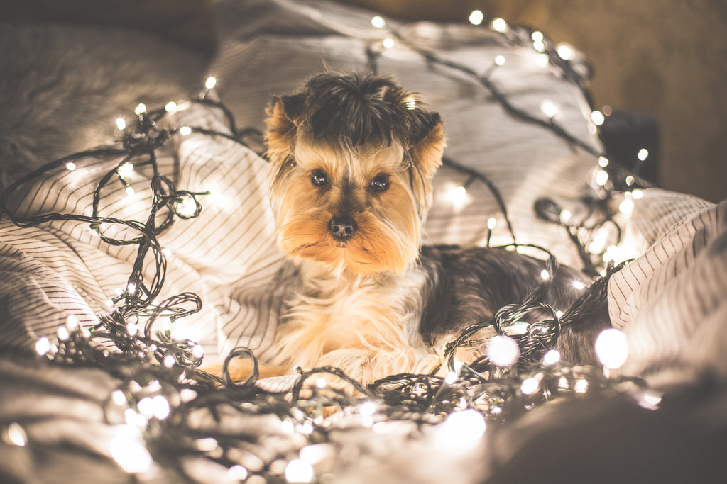 Keeping your pets healthy this Christmas means knowing what is safe and dangerous to eat