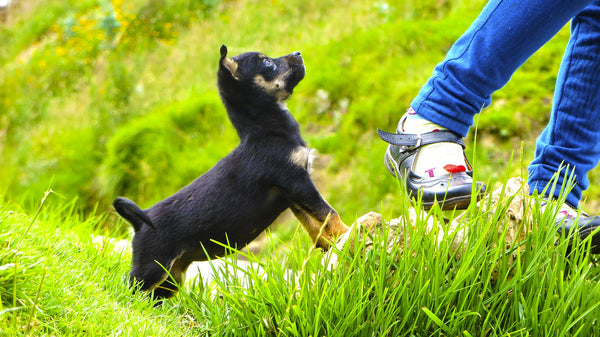 kids can help train puppies by being part of their exercise routine.