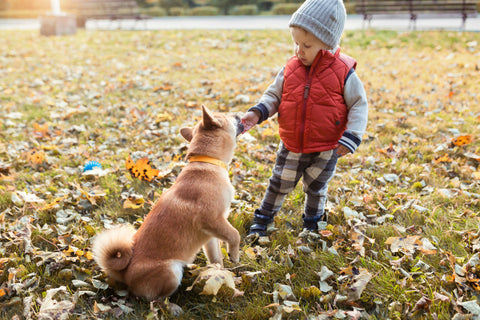 One of the best ways to involve your kids in puppy training is making them a part of the exercise routine.