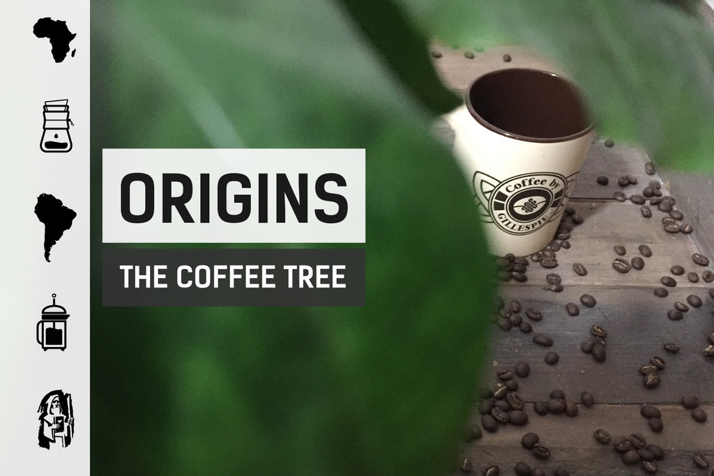 Coffee Origins: The Coffee Tree