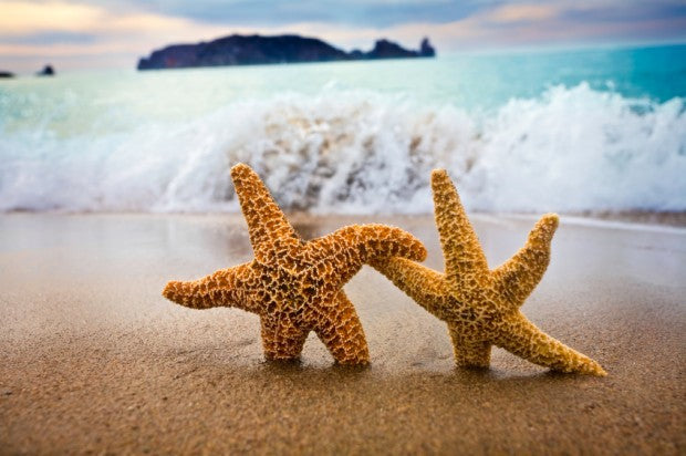 The Starfish Story That Can Save Humanity From Itself