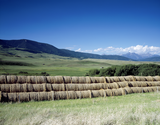 round hay bales stacked up in a green pasture near the mountains