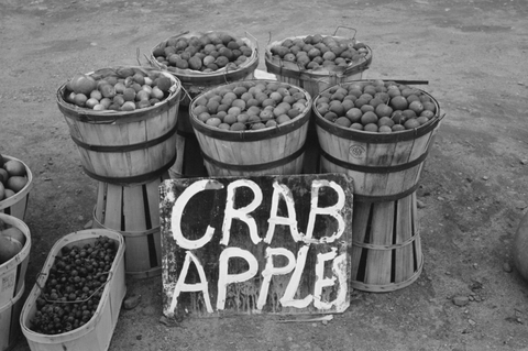 Crab apples displayed at roadside stand near Berlin, Connecticut.