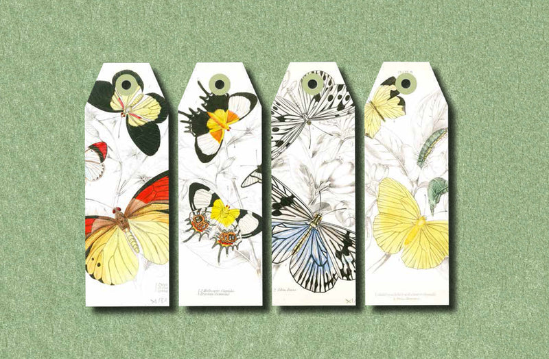 Papercraft Book - Natural History