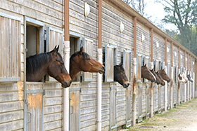 Management of Feeding 'Stress' in Stabled Horses