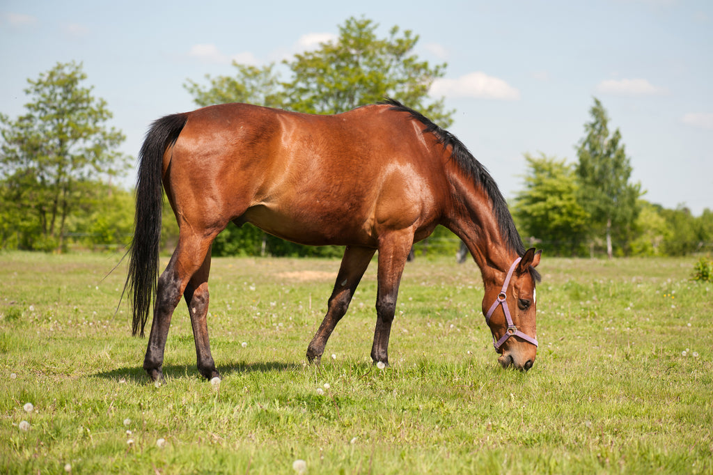 Hangry Horses and Picky Ponies: Top Tips for assessing, maximising and satisfying appetite