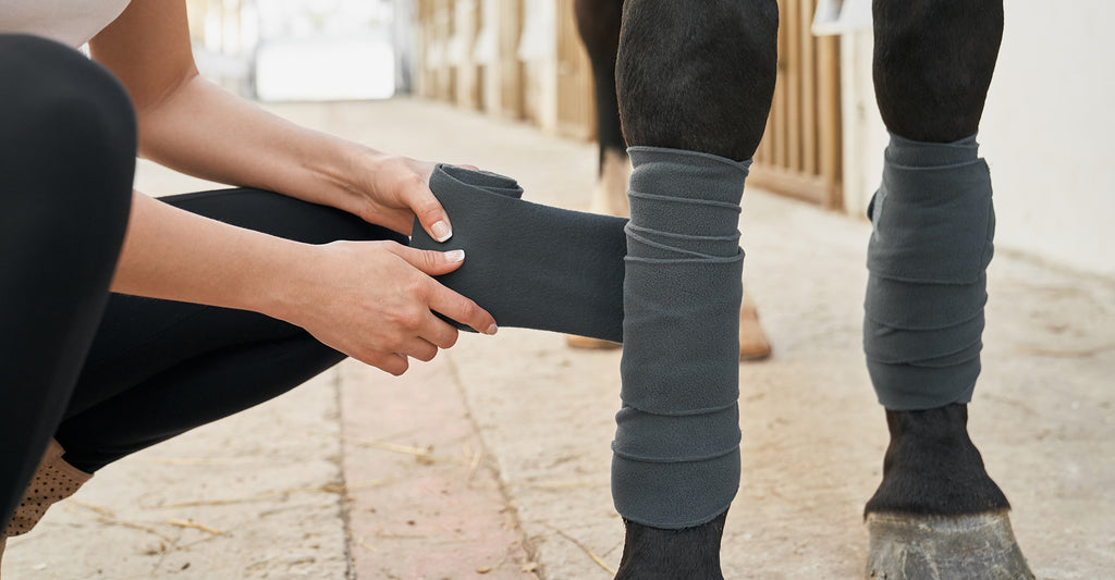 Why do horses suffer from filled legs?