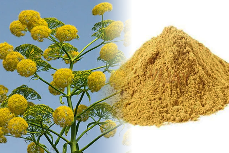 Asafoetida in Indian Cooking
