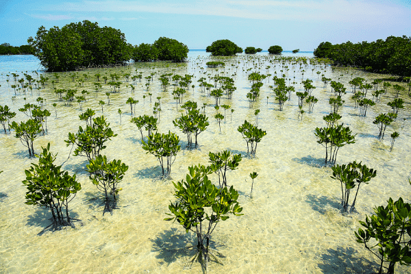SMOKO E-Cigarettes offsets some of its carbon footprint by support carbon offset projects like planting mangrove forests in Madagascar