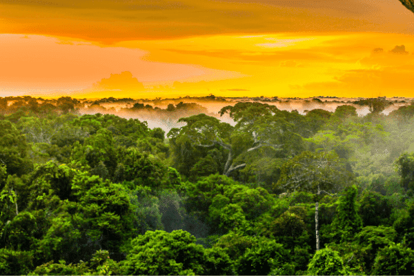 SMOKO E-Cigarettes offsets some of its carbon footprint by support carbon offset like protecting part of the Amazon rainforest