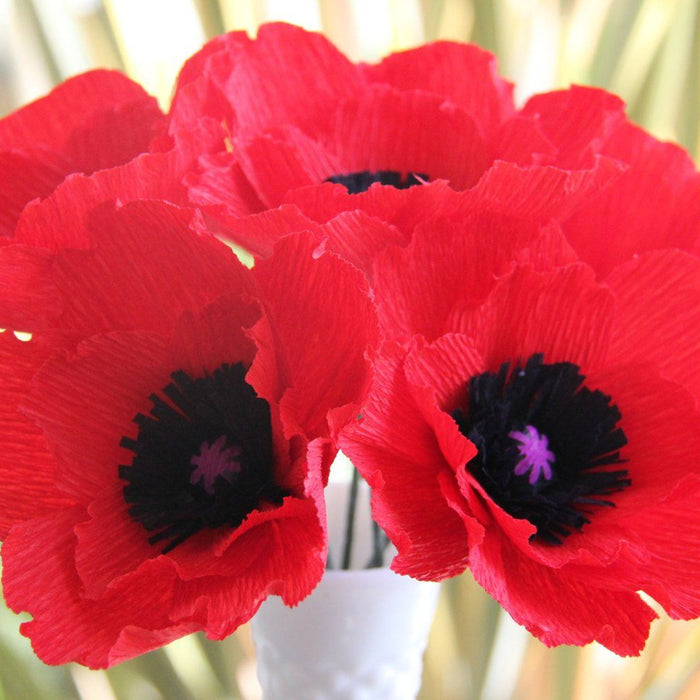 Poppy - The Flower of Remembrance - Veterans Day