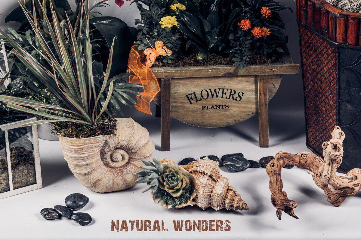 Natural Wonders - Plants and Planters