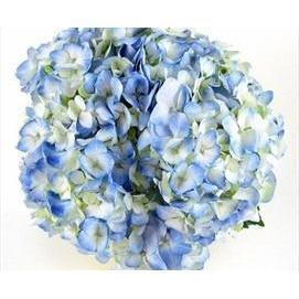 Blue Hydrangeas - DIY flower Bunches - flowersbypouparina.com