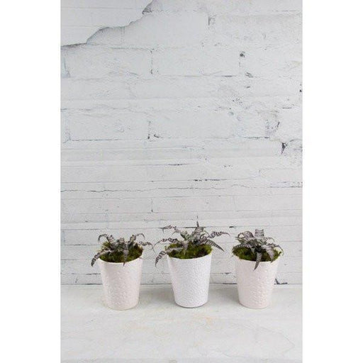Earth Star Trio - flowersbypouparina.com