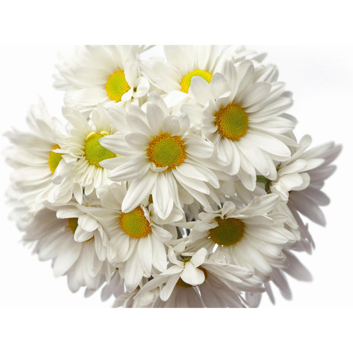 Flower Bunches - Daisies - flowersbypouparina.com