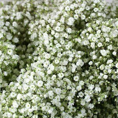 Gypsophilia - Baby's breath - DIY flower Bunches - flowersbypouparina.com