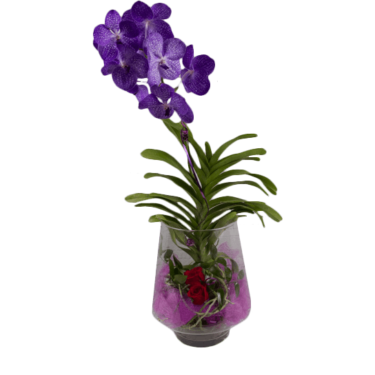Purple Royale - flowersbypouparina.com