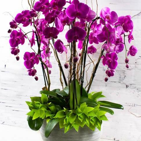 Purple Swan Orchids and Pothos - flowersbypouparina.com