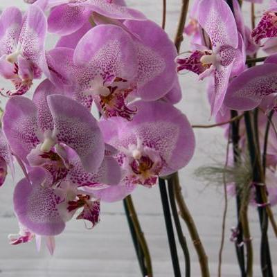 Quiet Breeze Orchids - flowersbypouparina.com