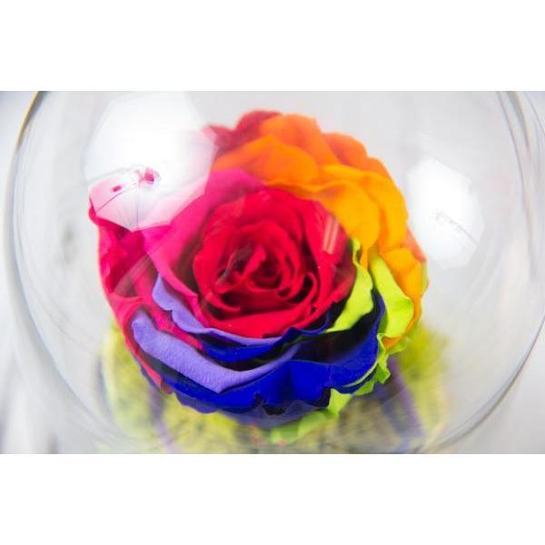 Single Preserved Rainbow Rose in Dome - flowersbypouparina.com