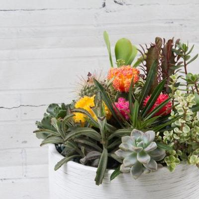 Succulents and Cactus - flowersbypouparina.com
