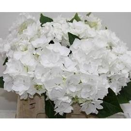 White Hydrangeas - DIY flower Bunches - flowersbypouparina.com