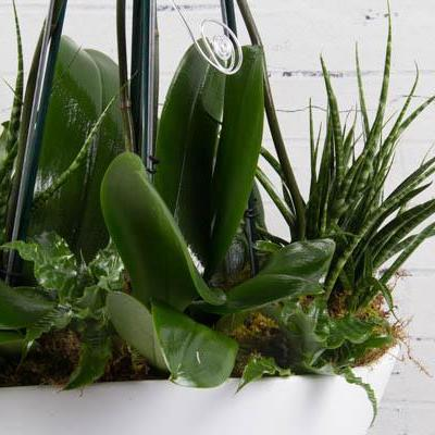 White Swan Orchids and Succulents - flowersbypouparina.com