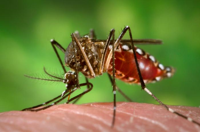 10 Common Mosquito Breeding Sites Around Your Home