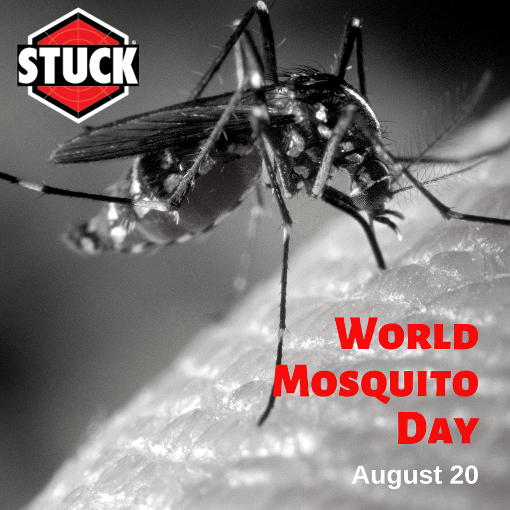 World Mosquito Day and Vector Control