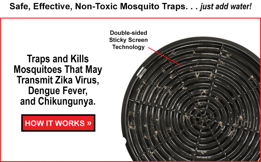 Mosquitoes On Sticky Screen