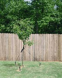 Plastic Tree Stakes for tying trees - sold online in stock and ready to ship from NW USA location!