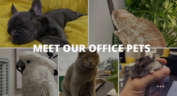 Meet The Pets at LifeLike Pillows