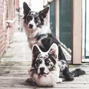 Border Collie Custom Dog Pillow - All About Vibe