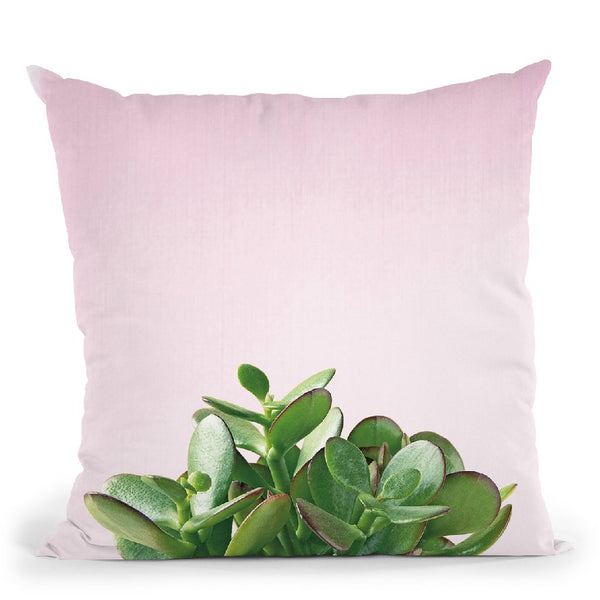 Succulent Simplicity Iii On Pink Throw Pillow By Felicity Bradley