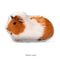 Custom Guinea Pig Pillow