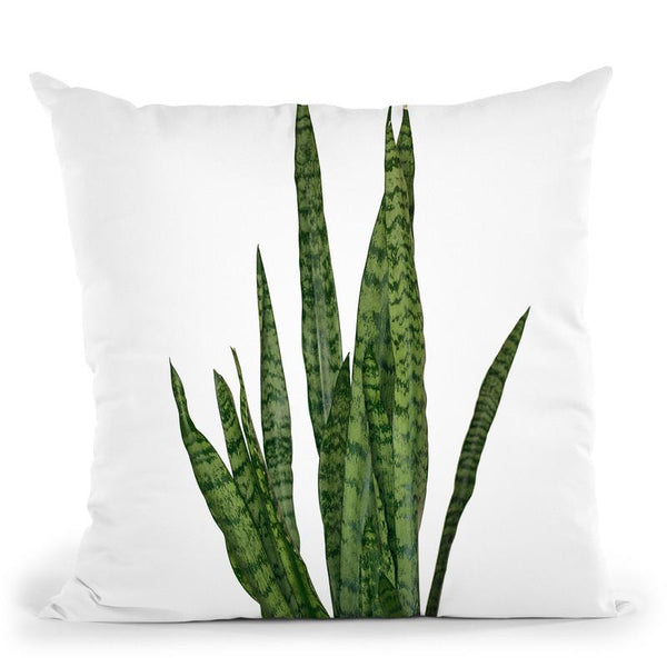 Plants7 Throw Pillow By Little Pitti