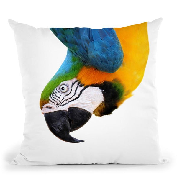 Parrot2 Throw Pillow By Little Pitti