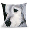 Max Ii Throw Pillow By Patsy Ducklow