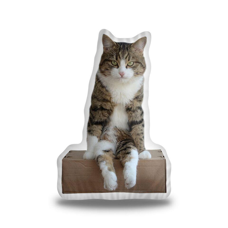 Rexiecat On a Box Custom Shaped Pillow