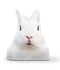 Very Fat Rabbit Mel Throw Pillow