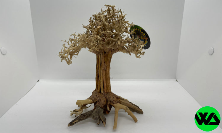 Pagoda Bonsai Wood Medium