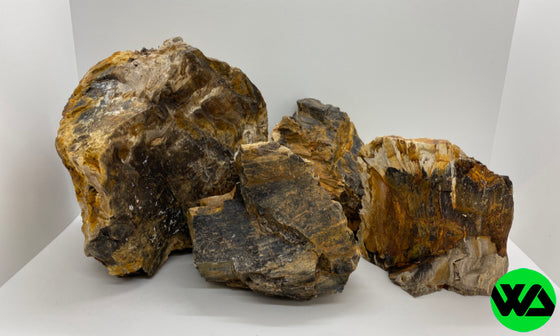 Whitlyn Aquatics - Petrified Wood Rock