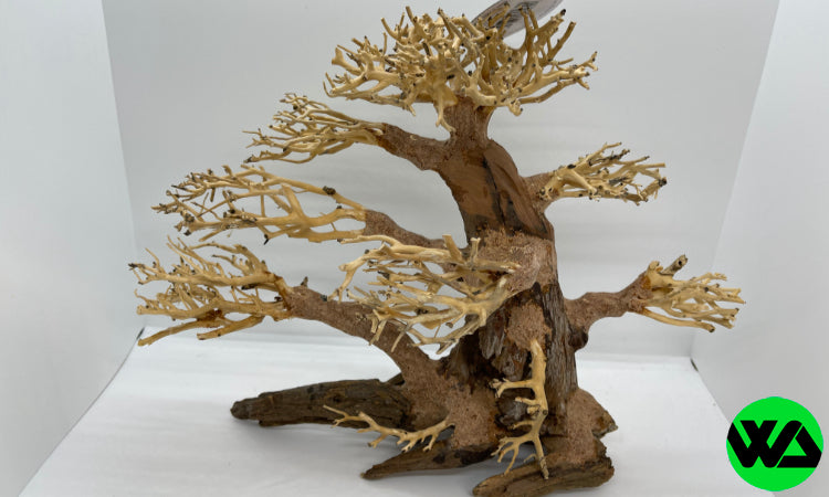 Pine Bonsai Wood