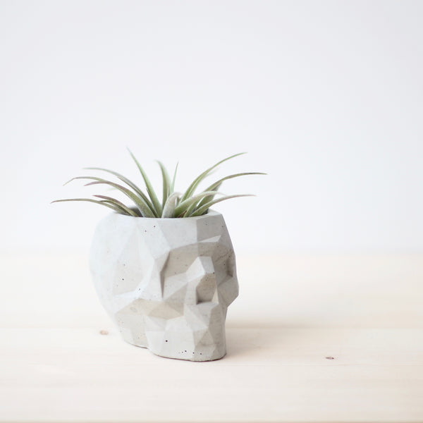 Geometric Skull Planter | Vase | Pen Holder