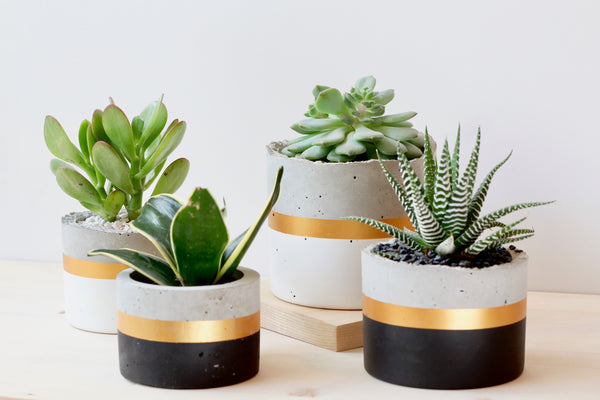 Cylinder Planter with Gold Band