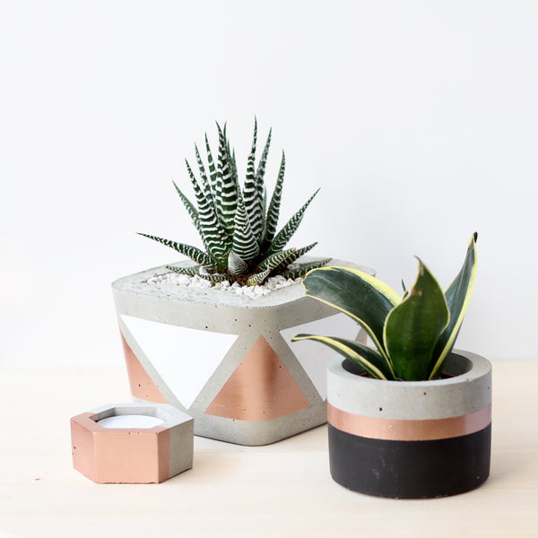 Cylinder Planter with Rose Gold band