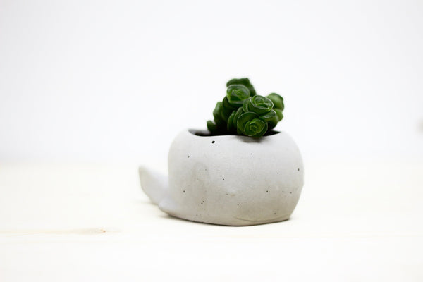 Cute Whale Planter - Colour Blocked