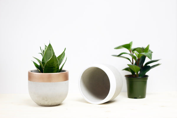 Large Rounded Concrete Planter
