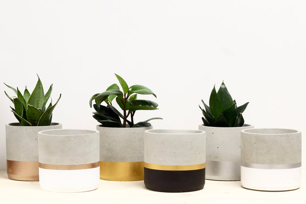 Large Cylinder Concrete Planter Colour Blocked